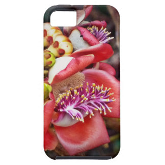 Cannonball Fruit Sala Flower iPhone 5 Cases