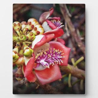 Cannonball Fruit Sala Flower Plaques