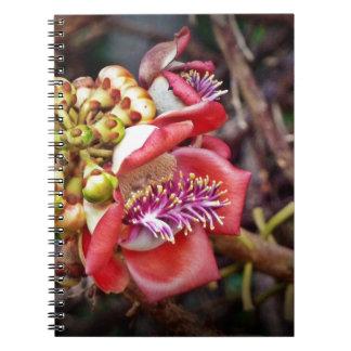 Cannonball Fruit Sala Flower Spiral Notebook