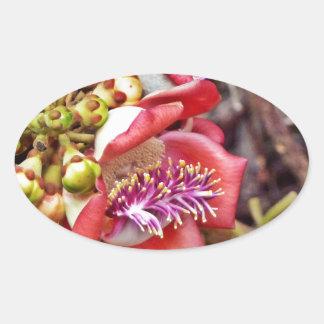 Cannonball Fruit Sala Flower Sticker