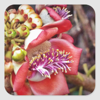 Cannonball Fruit Sala Flower Square Stickers