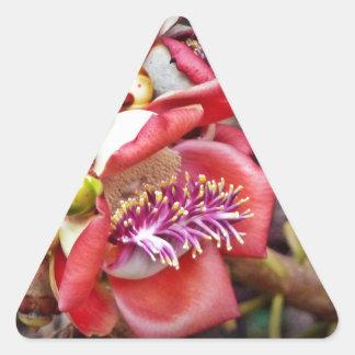 Cannonball Fruit Sala Flower Stickers
