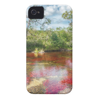 CANO CRISTALES 3 iPhone 4 PROTECTORES