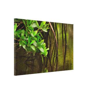 Canoeing Through Quiet Mangroves Canvas Print
