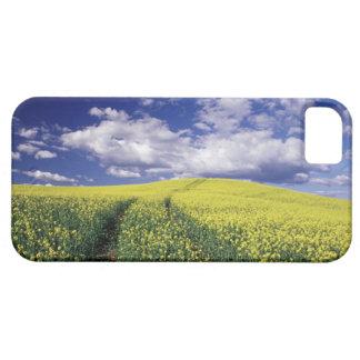 Canola amarillo en el estado del condado de iPhone 5 carcasas