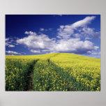 Canola amarillo en el estado del condado de Whitma Impresiones