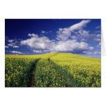 Canola amarillo en el estado del condado de Whitma Tarjeton