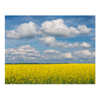 Canola Field & Clouds Post Card