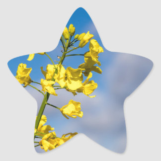 Canola field in summer with yellow flowers and blu star sticker
