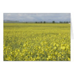 Canola flowering in field. greeting card