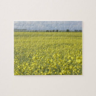 Canola flowering in field. puzzle