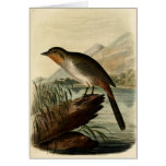 Canon Finch Greeting Card