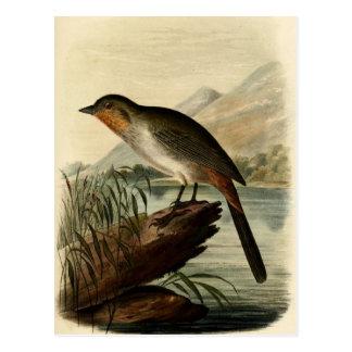 Canon Finch Postcard