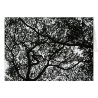 Canopy Above Card