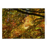 Canopy of Fall Leaves I Yellow Autumn Nature Card
