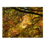 Canopy of Fall Leaves I Yellow Autumn Nature Postcard