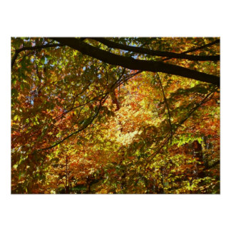 Canopy of Fall Leaves I Yellow Autumn Nature Poster