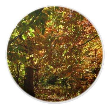 Beach Themed Canopy of Fall Leaves II Ceramic Knob