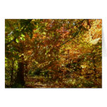 Canopy of Fall Leaves II Yellow Autumn Photography Card