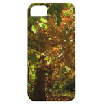 Canopy of Fall Leaves II Yellow Autumn Photography iPhone SE/5/5s Case