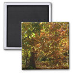 Canopy of Fall Leaves II Yellow Autumn Photography Magnet
