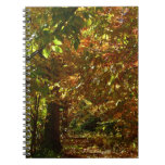 Canopy of Fall Leaves II Yellow Autumn Photography Notebook