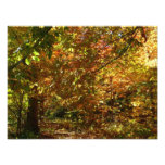 Canopy of Fall Leaves II Yellow Autumn Photography Photo Print