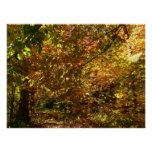 Canopy of Fall Leaves II Yellow Autumn Photography Poster