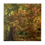 Canopy of Fall Leaves II Yellow Autumn Photography Tile