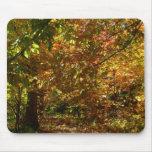 Canopy of Fall Leaves Mousepad