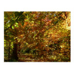 Canopy of Fall Leaves Postcard
