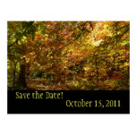 Canopy of Fall Leaves Save the Date Postcard