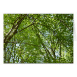 Canopy of Spring Leaves Green Nature Scene Card