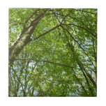 Canopy of Spring Leaves Green Nature Scene Ceramic Tile
