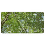 Canopy of Spring Leaves Green Nature Scene License Plate