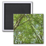 Canopy of Spring Leaves Green Nature Scene Magnet