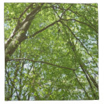 Canopy of Spring Leaves Green Nature Scene Napkin