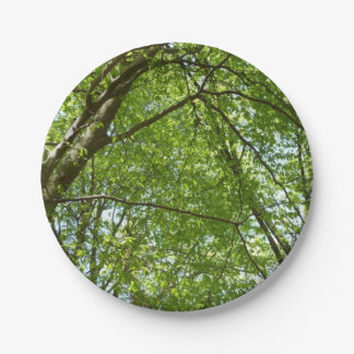 Canopy of Spring Leaves Green Nature Scene Paper Plate