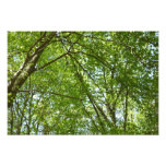 Canopy of Spring Leaves Green Nature Scene Photo Print