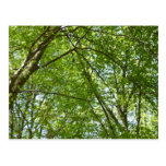 Canopy of Spring Leaves Green Nature Scene Postcard