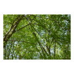 Canopy of Spring Leaves Green Nature Scene Poster