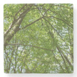 Canopy of Spring Leaves Green Nature Scene Stone Coaster