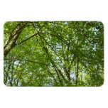 Canopy of Spring Leaves Magnet