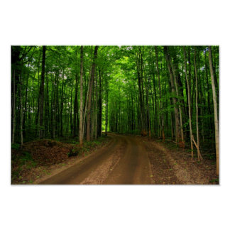 Canopy of Trees print
