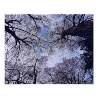"Canopy - Trees and Sky 14"" x 11"" Photo Enlargement"