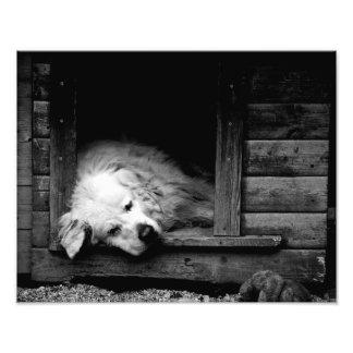 Cansado - impresión de la foto fotografías