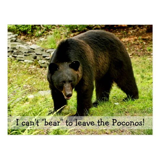 """Can't """"Bear"""" to Leave Poconos Postcard"""