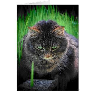 Can't look away - Cat Haiku Card