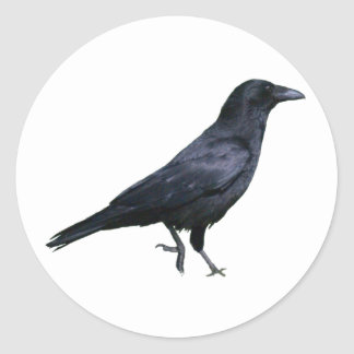 Canta crow