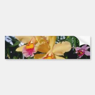 Cantalope Setting Sun Brassocattleya flowers Bumper Sticker